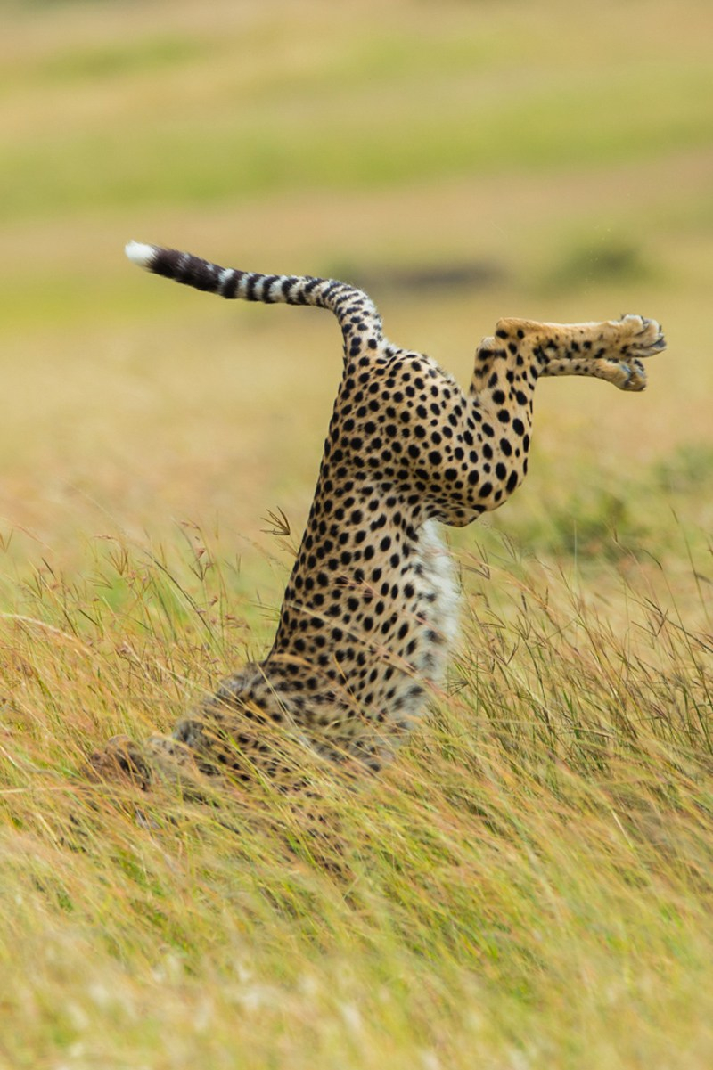 Mohammed Alnaser / Comedy Wildlife Photography Awards