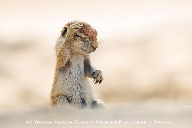 Yuzuru Masuda / Comedy Wildlife Photography Awards