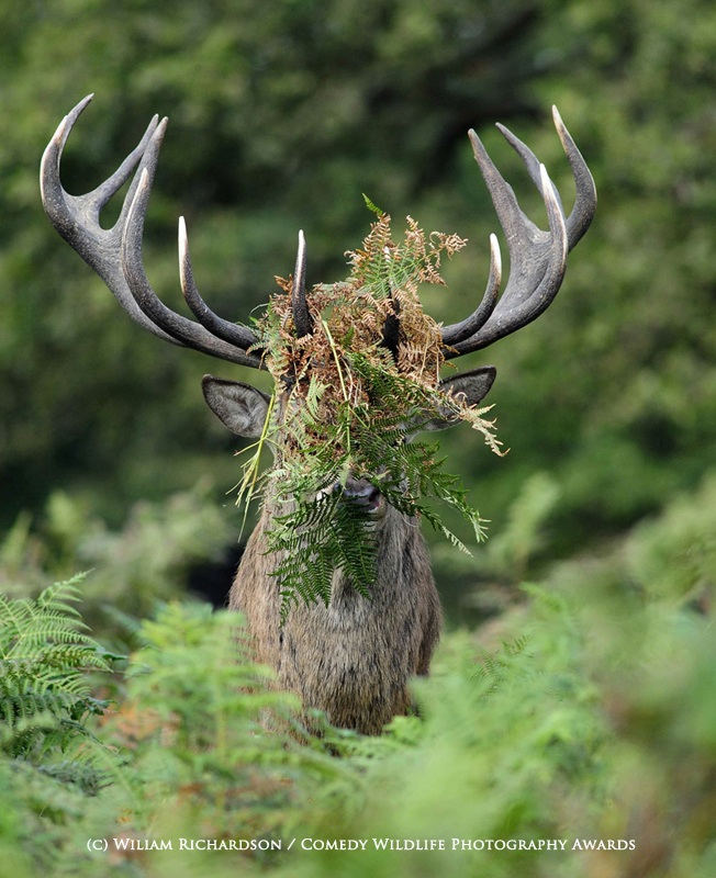 Silver runner up. William Richardson / Comedy Wildlife Photography Awards