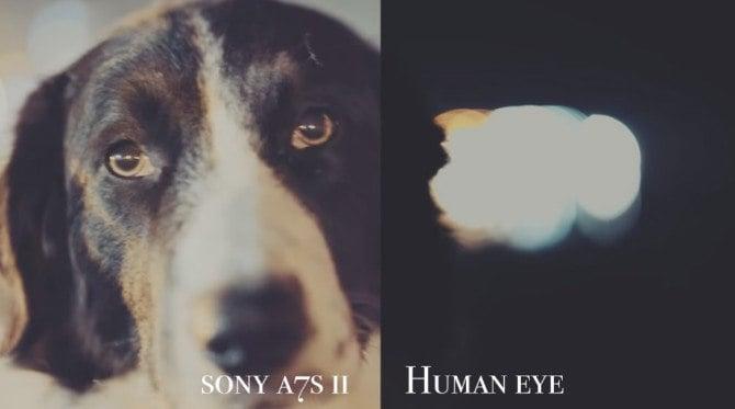 human-eye-a7sii-04