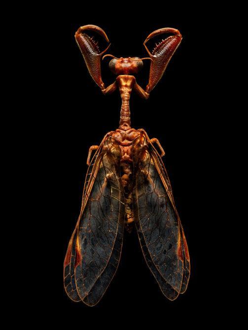 LEVON_BISS_Mantis-Fly-New-New