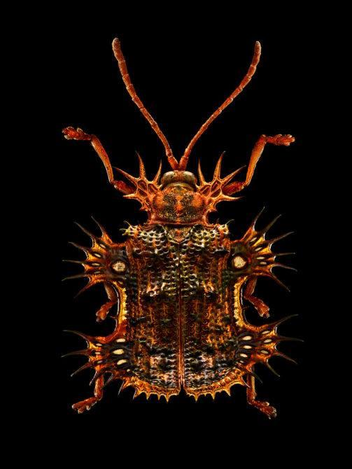 LEVON_BISS_Tortoise-Beetle