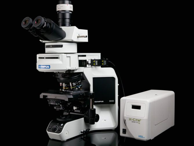 The Olympus BX 53is the microscope Waldo uses to makemost of his photomicrographs.