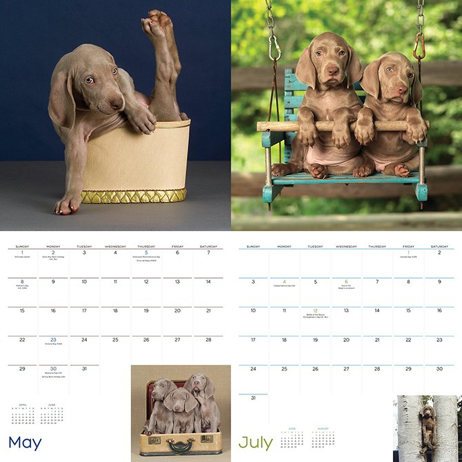 william_wegman_2016_calendar