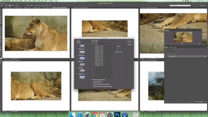 bokeh_panorama_wildlife