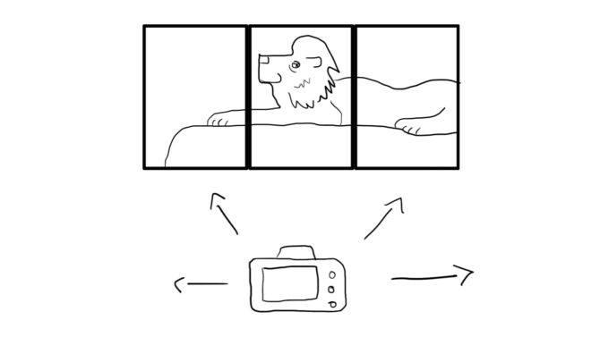 lion_multiple_shots
