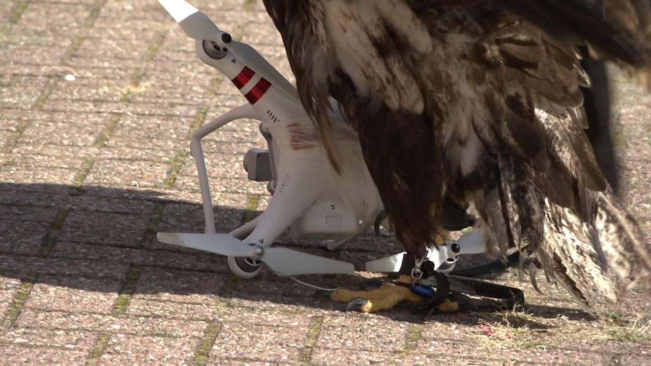eagle-take-down-drone