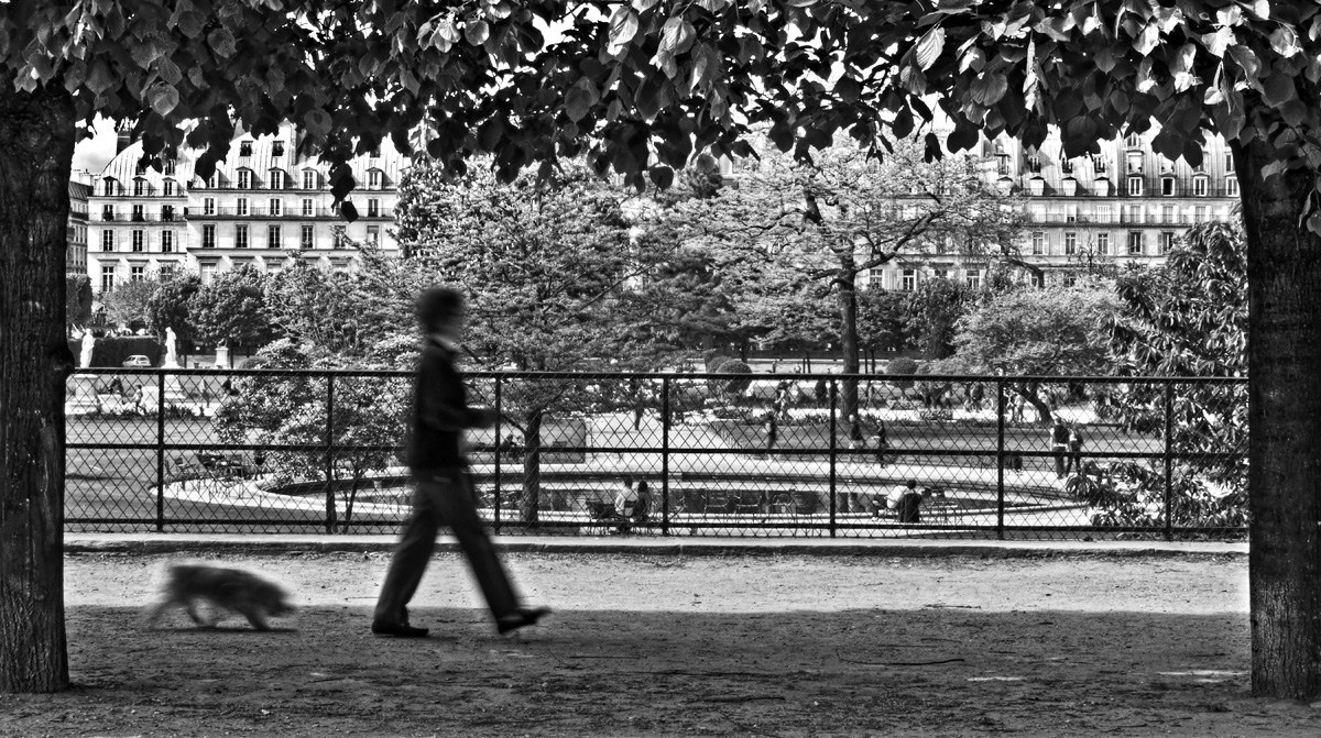 walking-dog-in-tuileries-gardens-paris