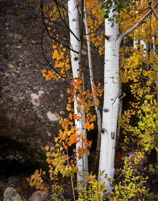 Near Hagerman Pass, Colorado - September 2012