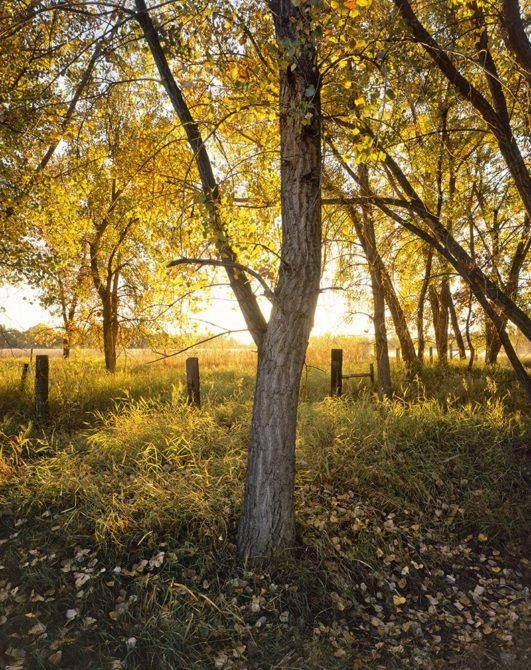 """""""Glowing Cottonwood"""" - Provia 100f 4x5, 75mm lens - 1 second at f32, no filters."""