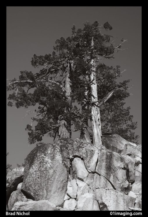 TLC image converted to mono using mainly the blue and some of the green channel, (a Combo that rarely works well at all) taken at 35mm f7.1 on the NEX 5n somewhere along the Tioga Pass in California a few years back.