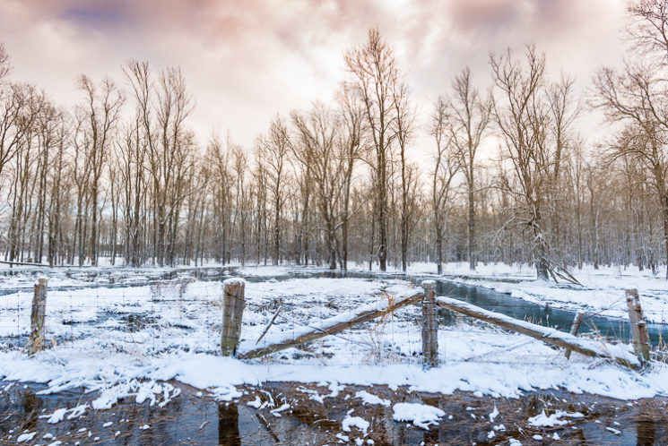 Wide angle view wire fence at edge of winter forest under stormy cloudy sky